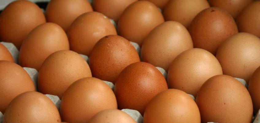 В детском доме Удмуртии нашли куриные яйца без ветеринарных документов