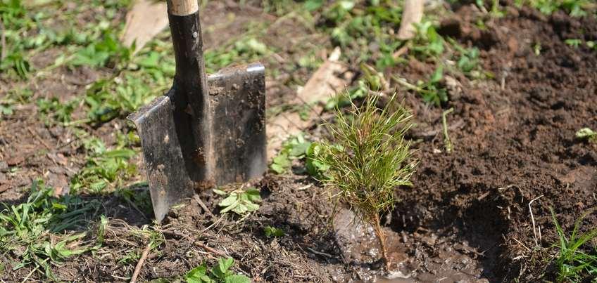 В этом году в Ижевске высадили больше 500 новых деревьев