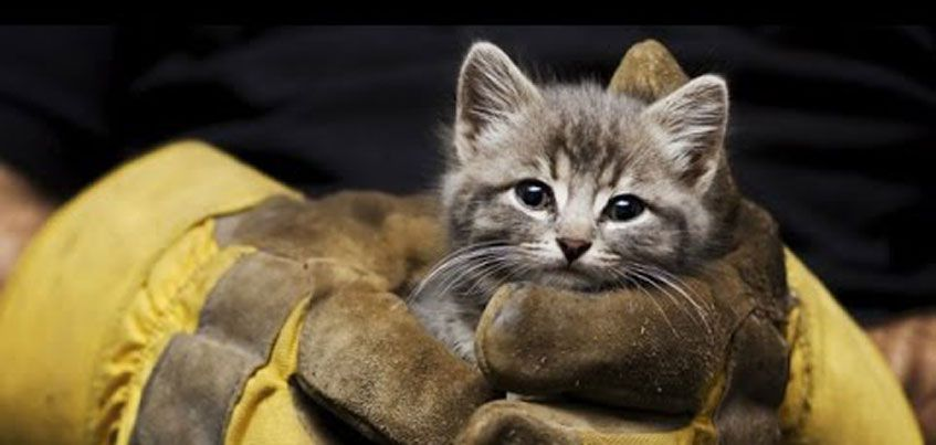 Пожарные спасли кота из горящей квартиры в Ижевске