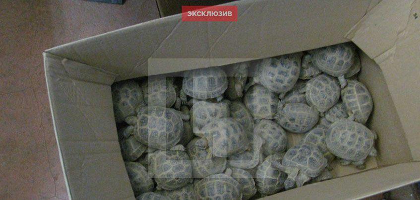 В Удмуртии с поезда сняли 250 черепах