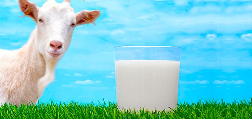 Три причины включить в свой рацион козье молоко