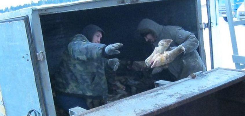 16 тонн останков животных изъяли со склада в Ленинском районе Ижевска