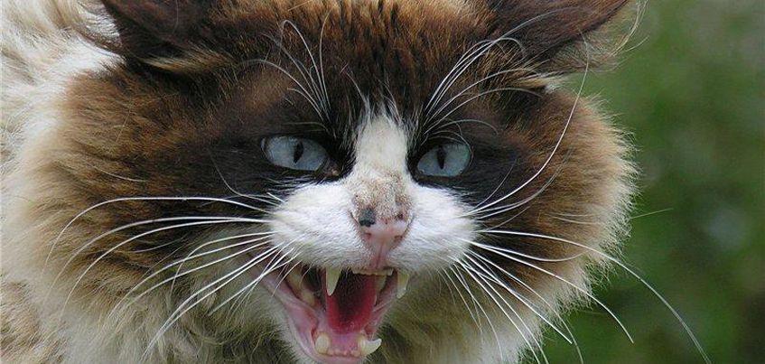 В Удмуртии зафиксировали новый случай бешенства у животного