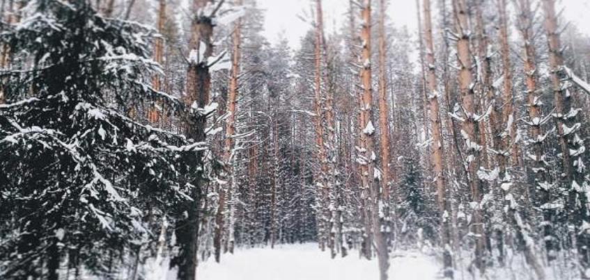 11 волшебных фотографий наступающей в Ижевске зимы