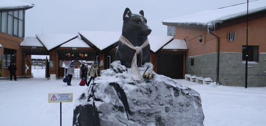 Новогоднюю елку откроют в конце декабря в зоопарке Ижевска
