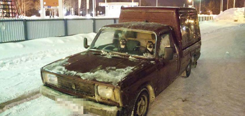 Очевидцы: Ижевск настолько суров, что машины здесь водят даже собаки