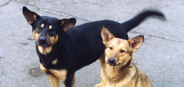 В Ижевске от рук неизвестных погибли две собаки
