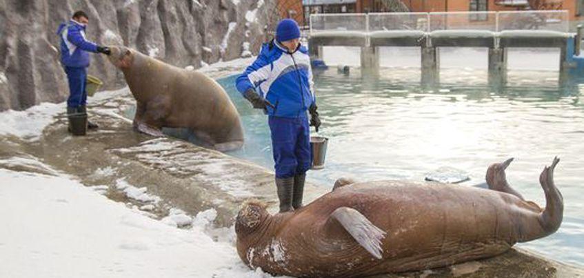 1 января горожане смогут бесплатно посетить Ижевский зоопарк