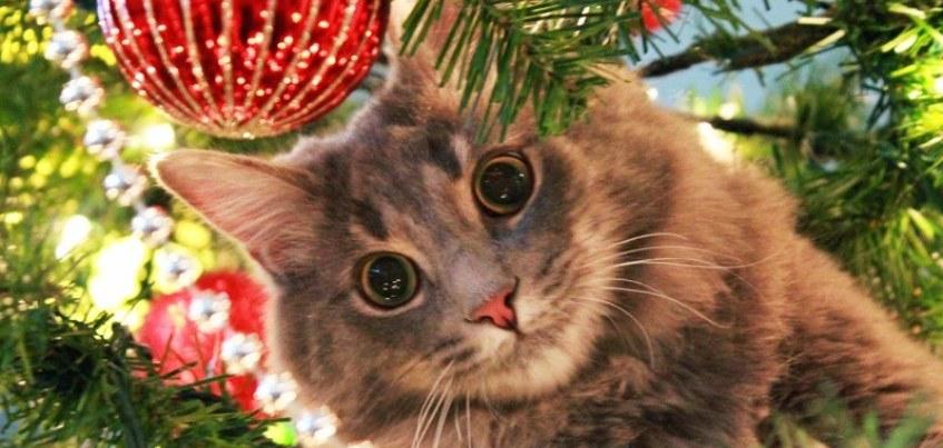 Коты против елок: пришлите фото и и выиграйте подарочный сертификат в «Воткинские термы»