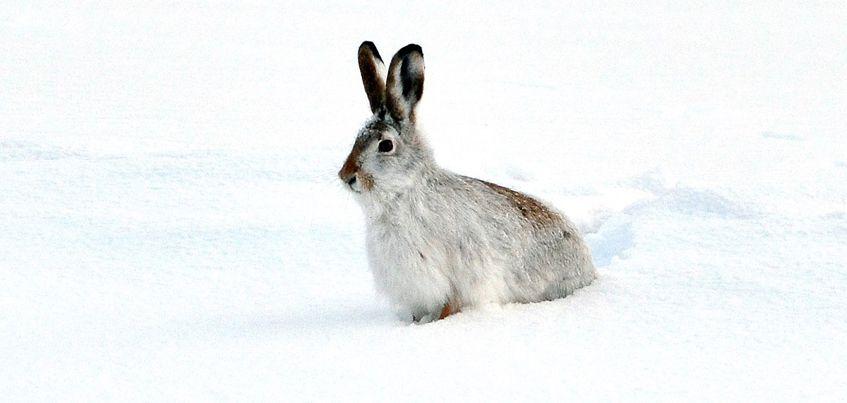 Фотофакт: В Удмуртии на стадионе «Энергия» тренируются даже зайцы