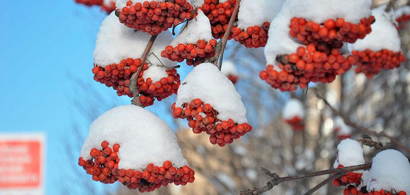 Почти, как в Альпах: Какой будет погода в будни в Ижевске?
