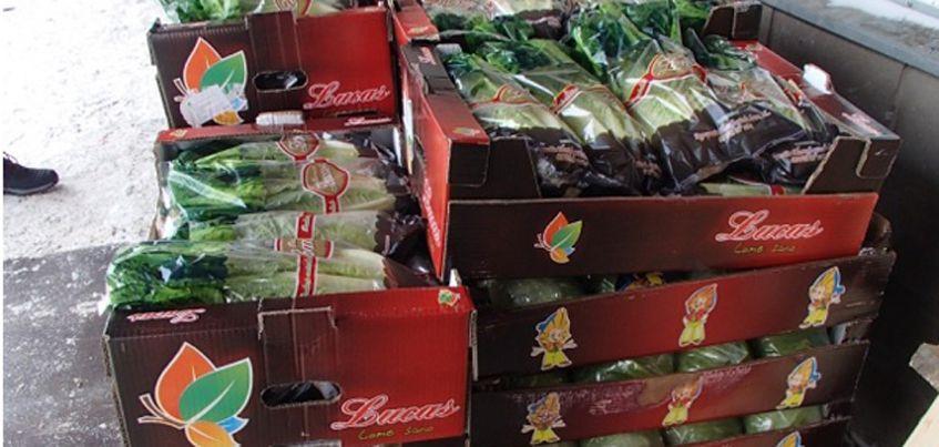 В Ижевске уничтожили почти 200 кг листового салата
