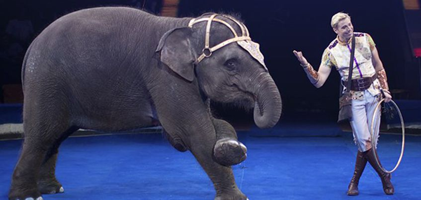 На десятый Международный фестиваль циркового искусства в Ижевск приедут артисты из 15 стран мира