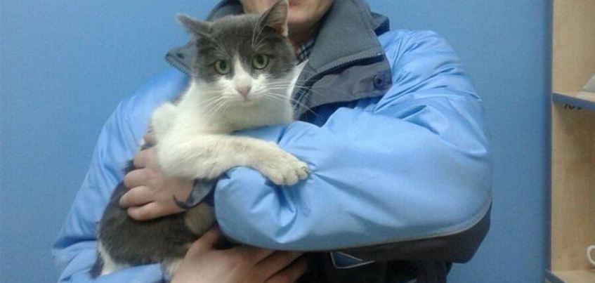 Сотрудники ижевского автосервиса спасли кота, который проехал под капотом авто 60 км