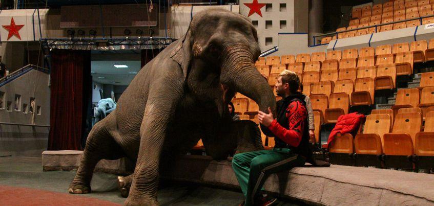 В эфире радио «Комсомольская правда»-Ижевск» побеседуют с участниками Циркового фестиваля