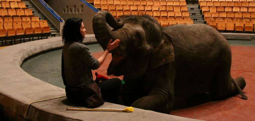 7 фото, на которых слоники, как котята: в Ижевск приехал цирк «Инди Ра»