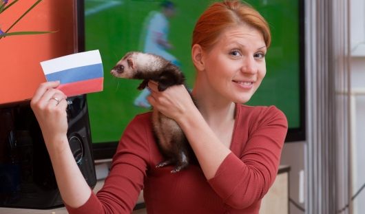 ЧМ-2014: хорек, жаба и палочник из Ижевска погадали на победу России