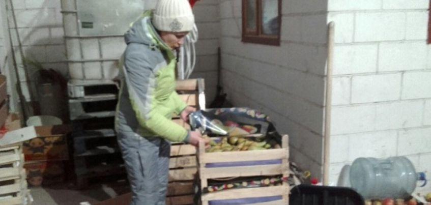 В Ижевске нашли и уничтожили 49 кг польских груш