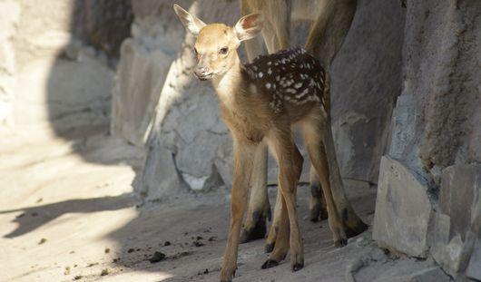 В зоопарке Ижевска родились сразу 7 детенышей
