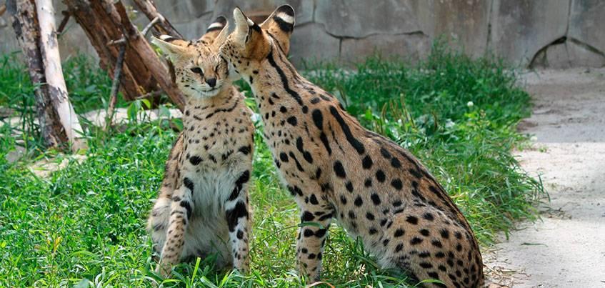 3 истории животных из Ижевского зоопарка, у которых можно поучиться верности и любви