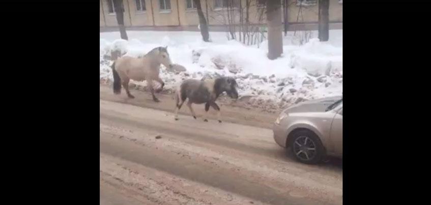 На разных ижевских улицах заметили пони и лошадей без хозяев