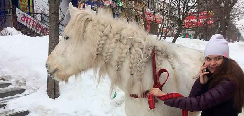 Хозяйка сбежавшей в Ижевске лошади: Потеряла след Весты возле парка Кирова
