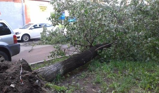 Из-за урагана в Ижевске дерево упало и перегородило дорогу