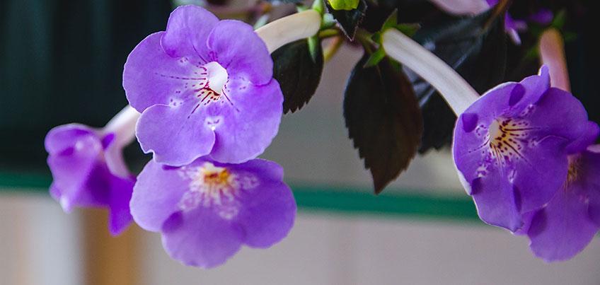 Цветник на даче: какие однолетние культуры можно высаживать в марте