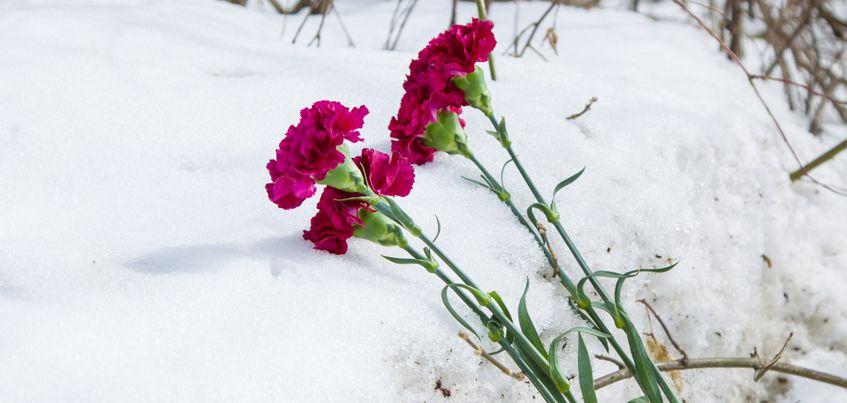 Ижевчане несут цветы на место гибели 36-летнего мужчины