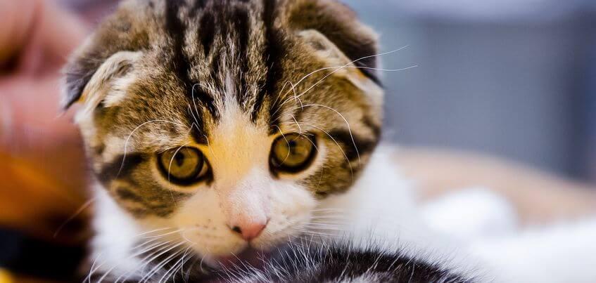 Выставка кошек, мастер-класс по приготовлению мороженого и еще 7 развлечений в Ижевске