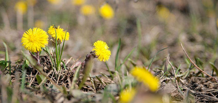 Весна пришла: В выходные в Ижевске температура поднимется до 10 градусов