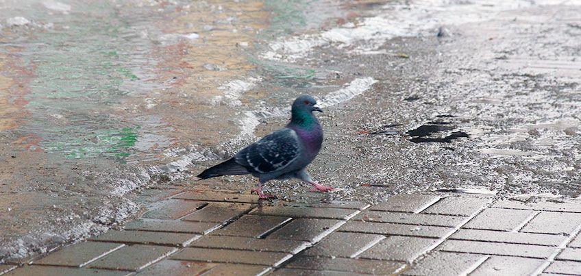 Дождь и снег: Какой будет погода в Ижевске в выходные?