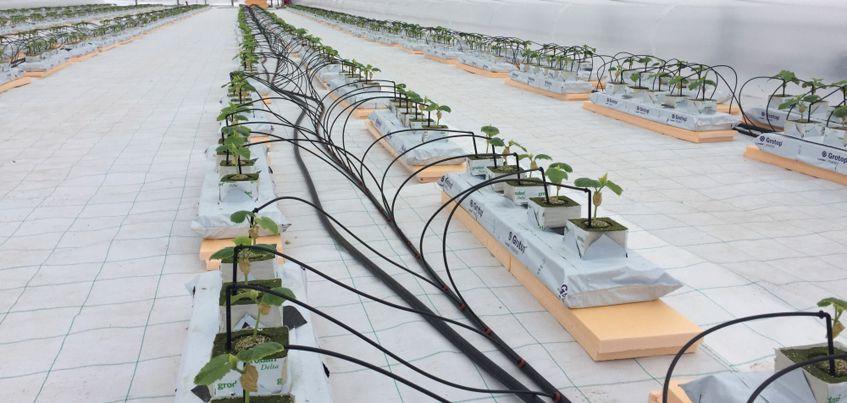В Ижевске начал работу тепличный комплекс, проект которого утвердили всего 9 месяцев назад
