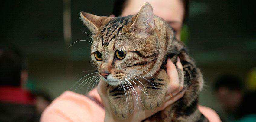 Сколько стоят самые милые породистые кошки в Ижевске?