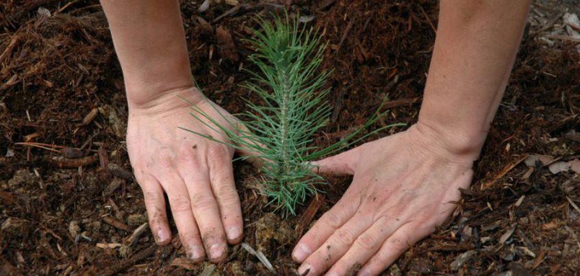В Удмуртии восстановят рощу, вырубленную во время расширения трассы Ижевск-Сарапул