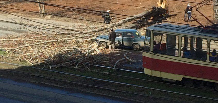 В Ижевске на улице Ленина прямо на дорогу упало дерево