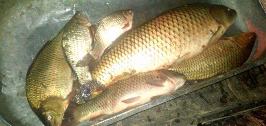 Сотрудники полиции нашли в машине у жителя Удмуртии 10 кг незаконно выловленной рыбы