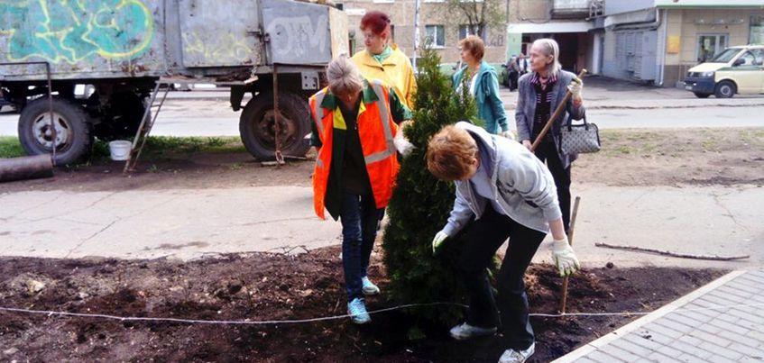 26 мая в Ижевске начали высаживать туи и кустарники в сквере на перекрестке улиц Т. Барамзиной - ул. 40 лет Победы