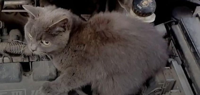 В Ижевске мужчина нашел под капотом своей машины кота