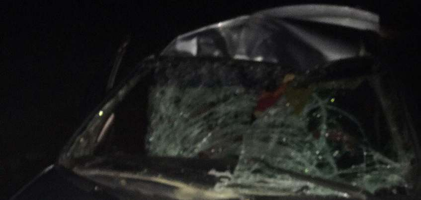 ДТП с лосем произошло в Малопургинском районе Удмуртии