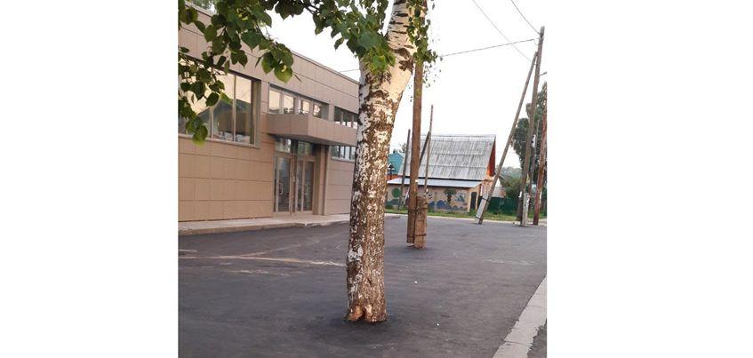 В Ижевске дорожники закатали в асфальт дерево
