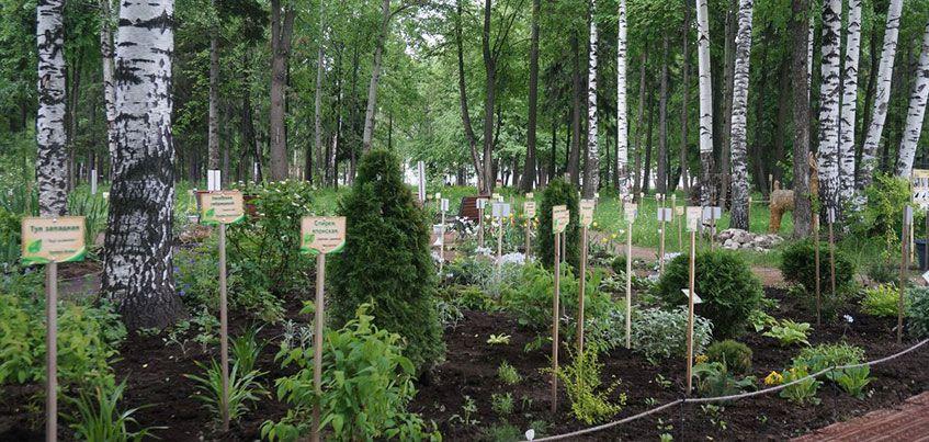 Дендропарк в парке Космонавтов в Ижевске увеличился на гектар