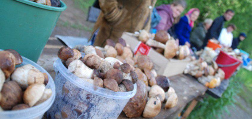 В Удмуртии с начала сезона в полицию поступило 20 сообщений о пропаже грибников