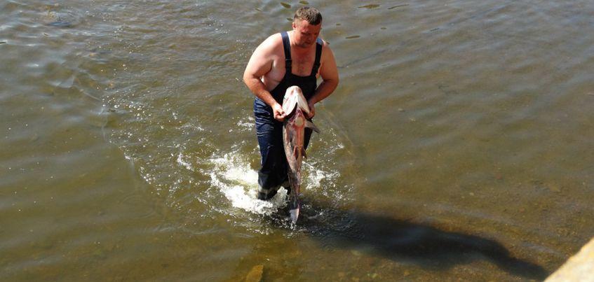 Фото: как в Ижевске спасали несколько сотен толстолобиков