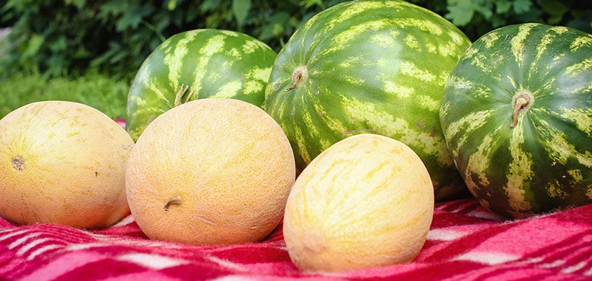 Где ижевчанам купить вкусные и безопасные арбузы и дыни?