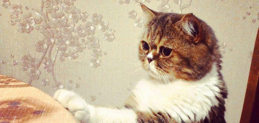 Баста, Люцифер и Пуфик: 17 фото кошек и котов читателей IZHLIFE