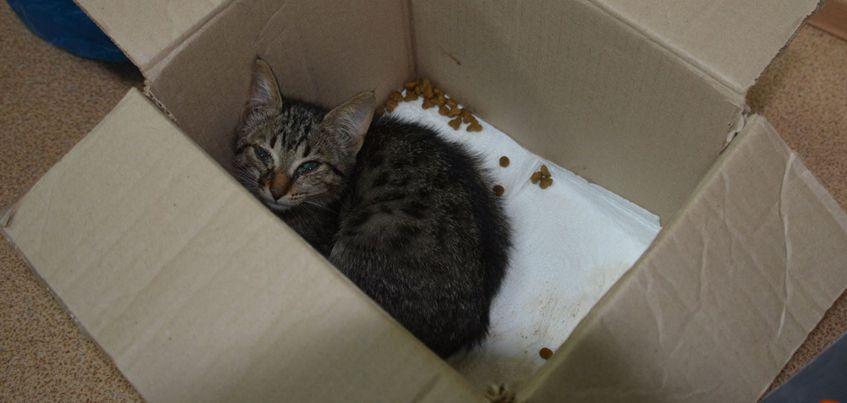 В Удмуртии сотрудники УФСИН спасли котенка