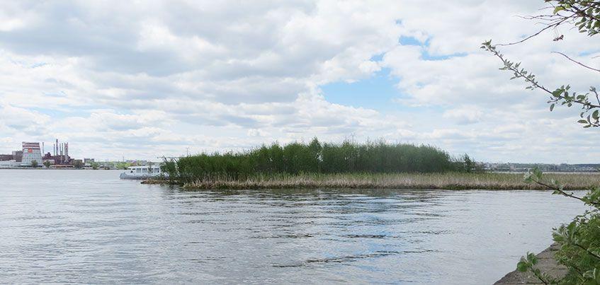 В Ижевске к середине осени утилизируют появившийся на пруду плавучий остров