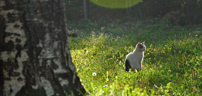Сентябрь в Ижевске: отмена интернатуры, новые правила ОСАГО и начало занятий в «Кванториуме»