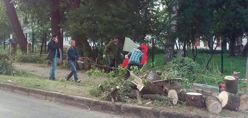 Подрядчиков накажут за поваленные деревья в пер. Широком в Ижевске